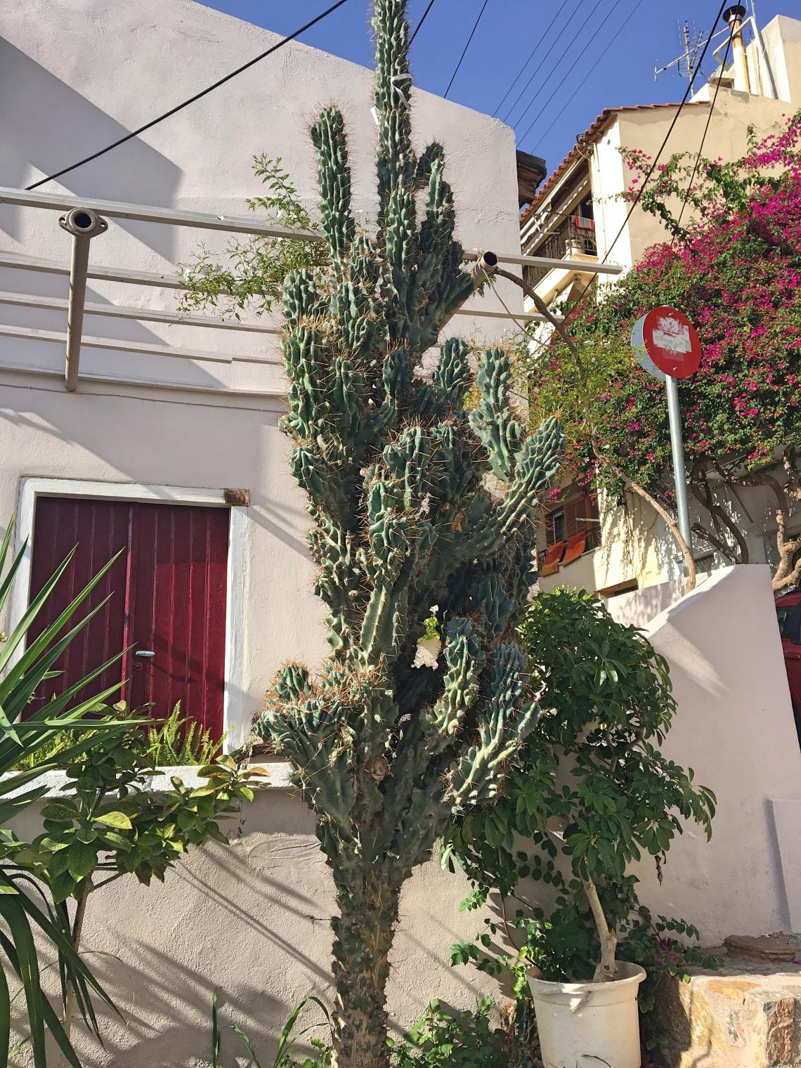 crete-cactus