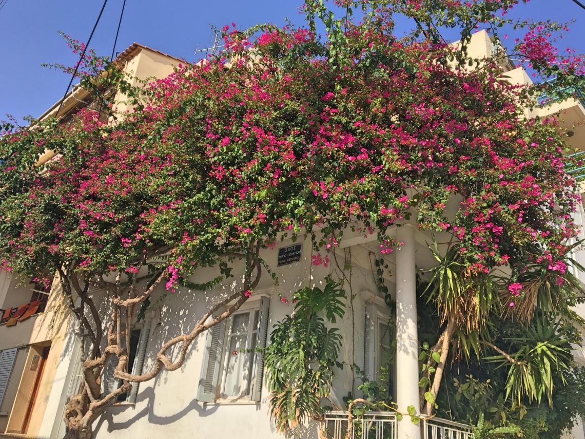 crete-flowers